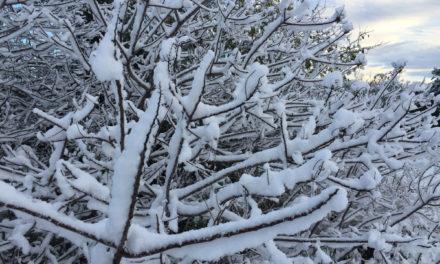 #Snowpocalypse 2017 – Kyle, Texas